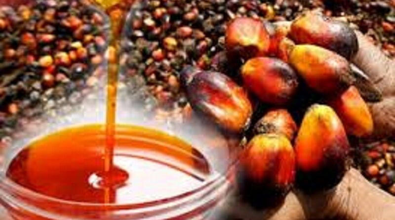 How to Make Millions of Dollars Farming Palm Oil